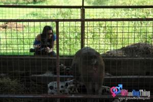 Organic Farm Tour - LAC Farms: Pascual Laboratories' Source