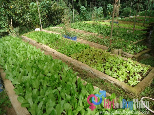 Vegetable gardening business plan container gardening ideas for Organic vegetable garden design