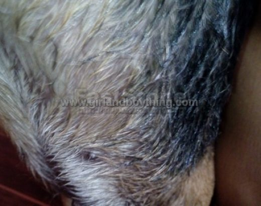 Pet Care: How to Remove Adhesive From Dog's Fur
