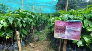 Binahon Agroforestry Farm