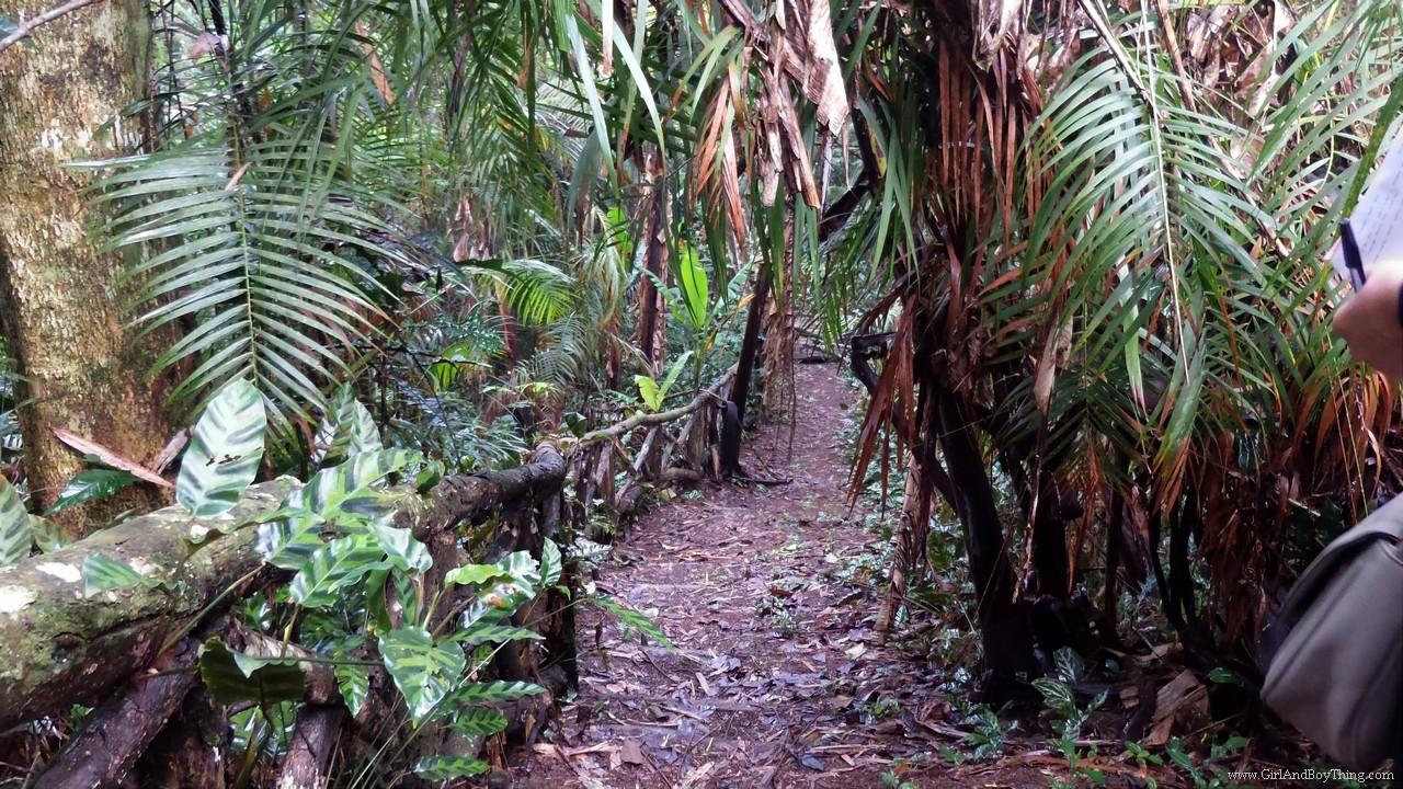 Binahon Agroforestry farm activities (7)