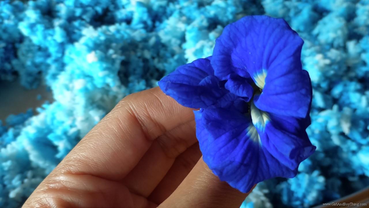 Jaya Secret Garden Blue Ternate