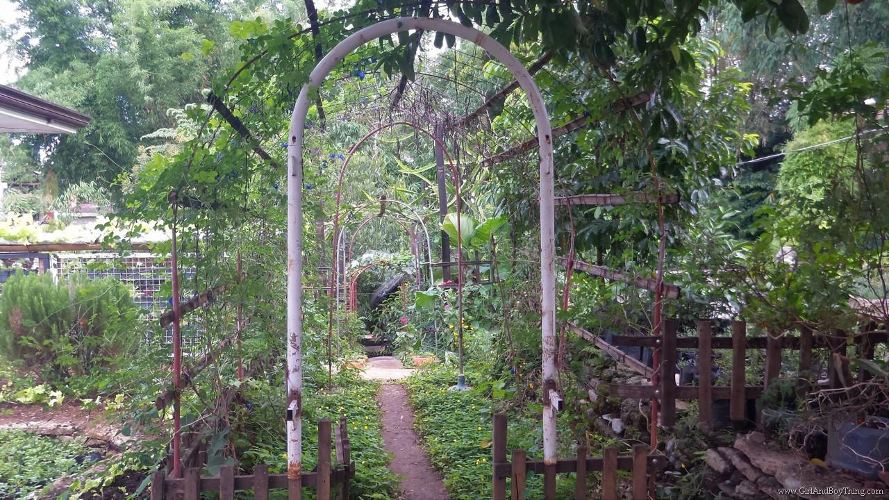 Jaya Secret Garden Organic Farm Tour (13)