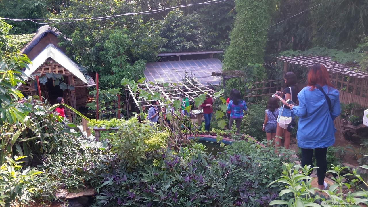 Jaya Secret Garden Organic Farm Tour (4)