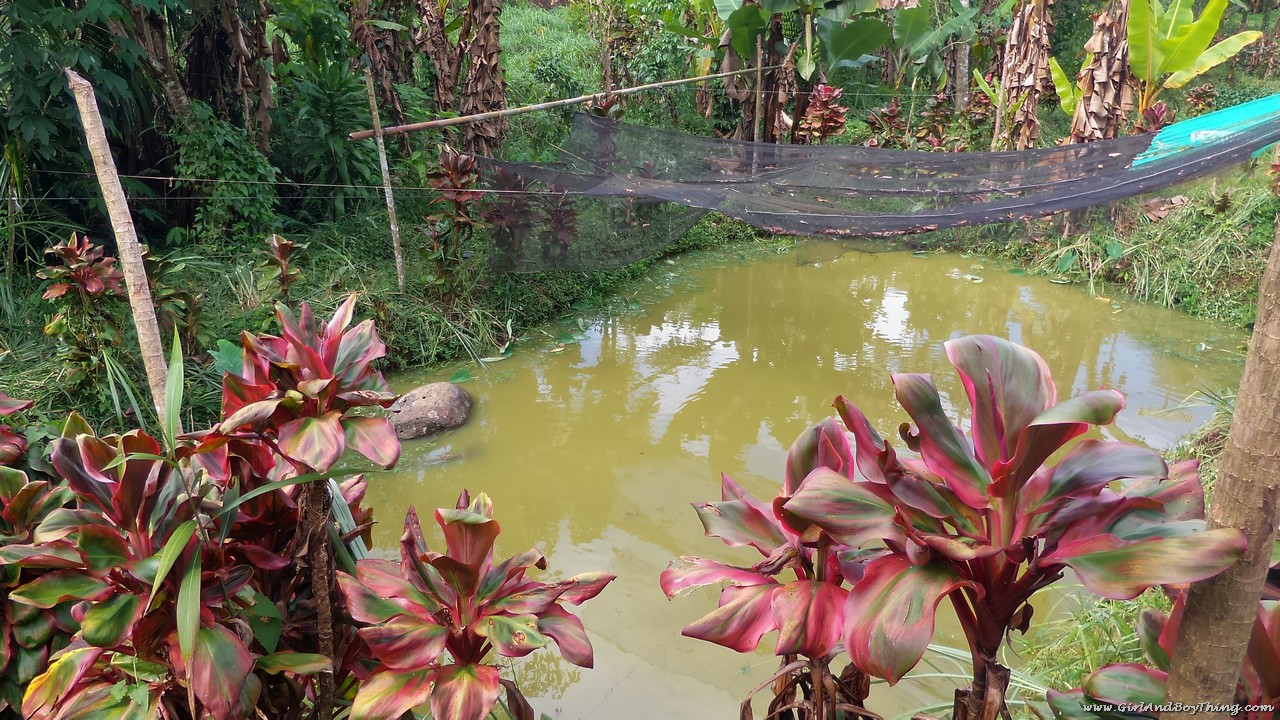 Mt. Kitanglad Agri-Ecological Techno-Demo Center Fish pond