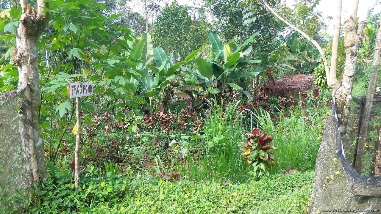 Mt. Kitanglad Agri-Ecological Techno-Demo Center Frog pond (2)