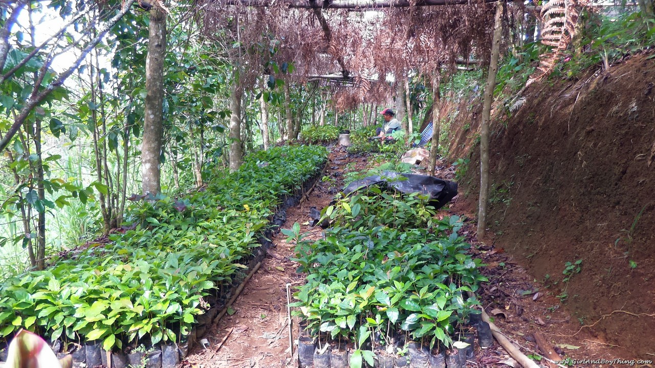 Mt. Kitanglad Agri-Ecological Techno-Demo Center Nursery Operation