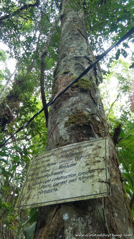Mt. Kitanglad Agri-Ecological Techno-Demo Center Rain Forestation (1)
