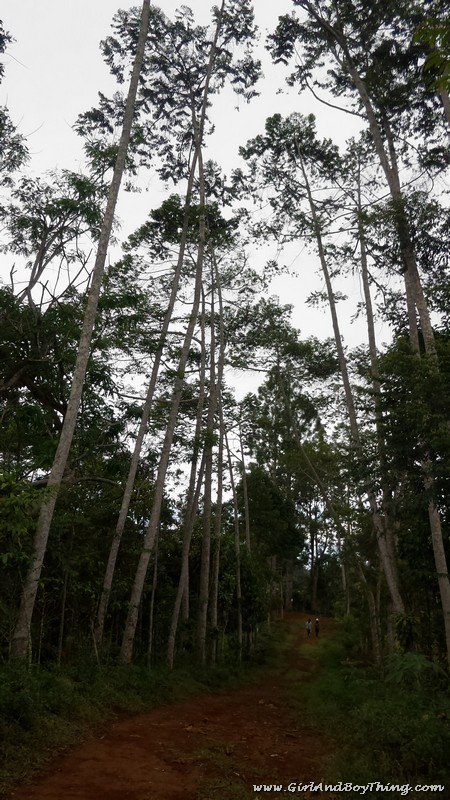 Mt. Kitanglad Agri-Ecological Techno-Demo Center Rain Forestation (2)