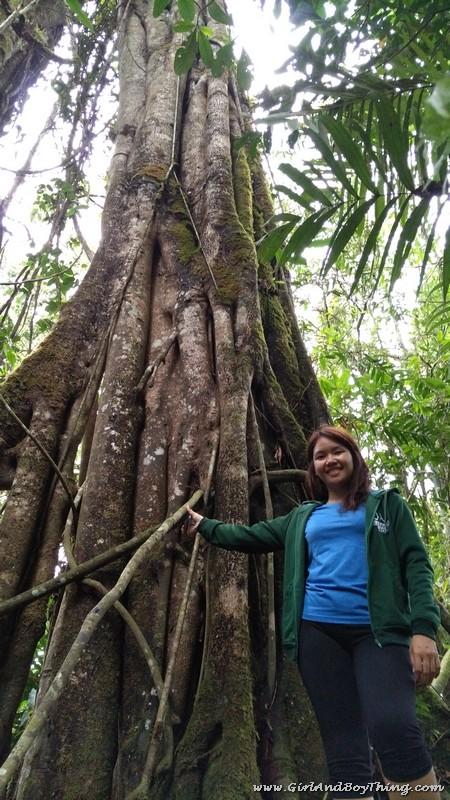 Mt. Kitanglad Agri-Ecological Techno-Demo Center Rain Forestation (3)