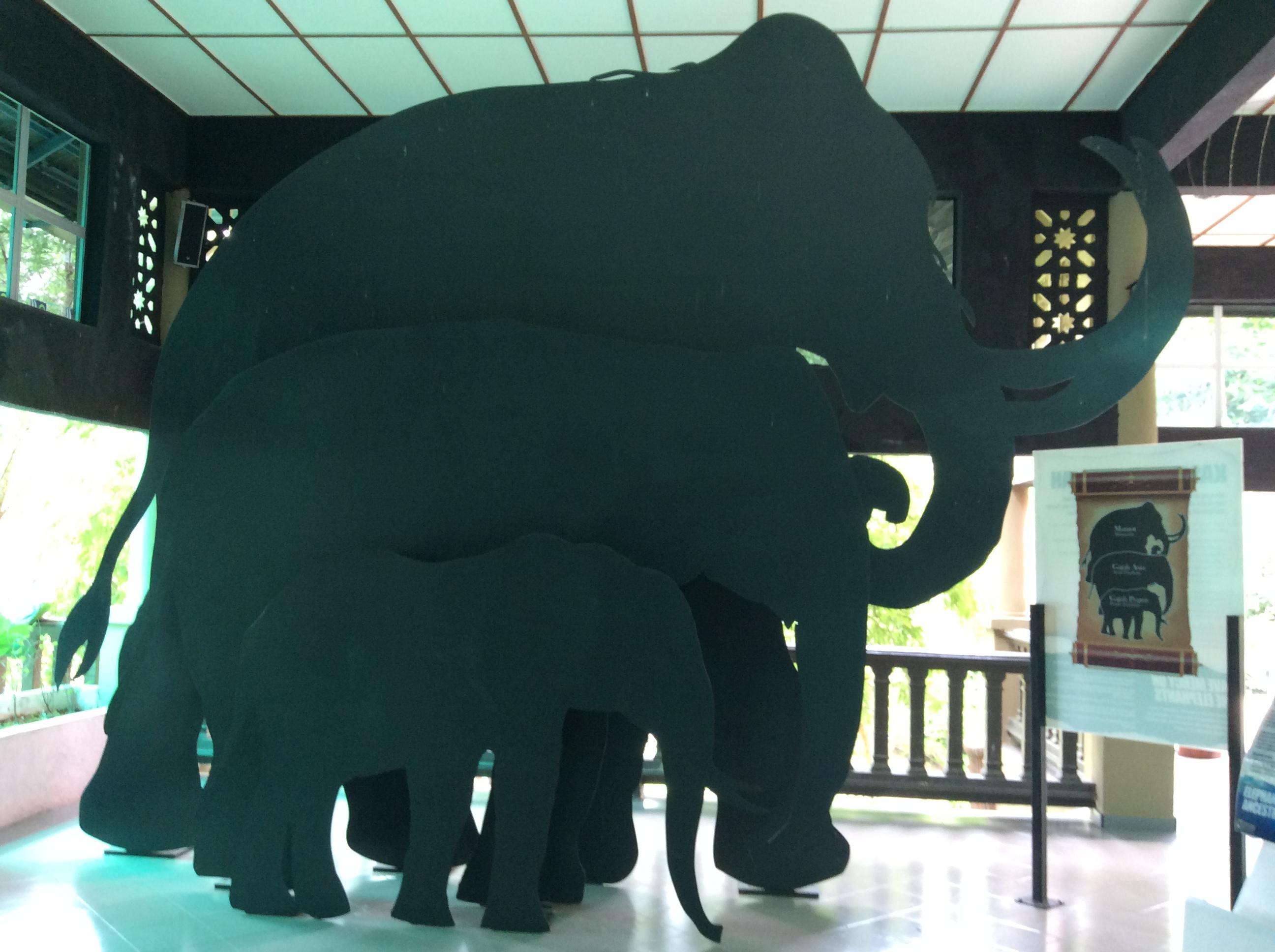 national-elephant-conservation-centre-kuala-gandah-museum-1
