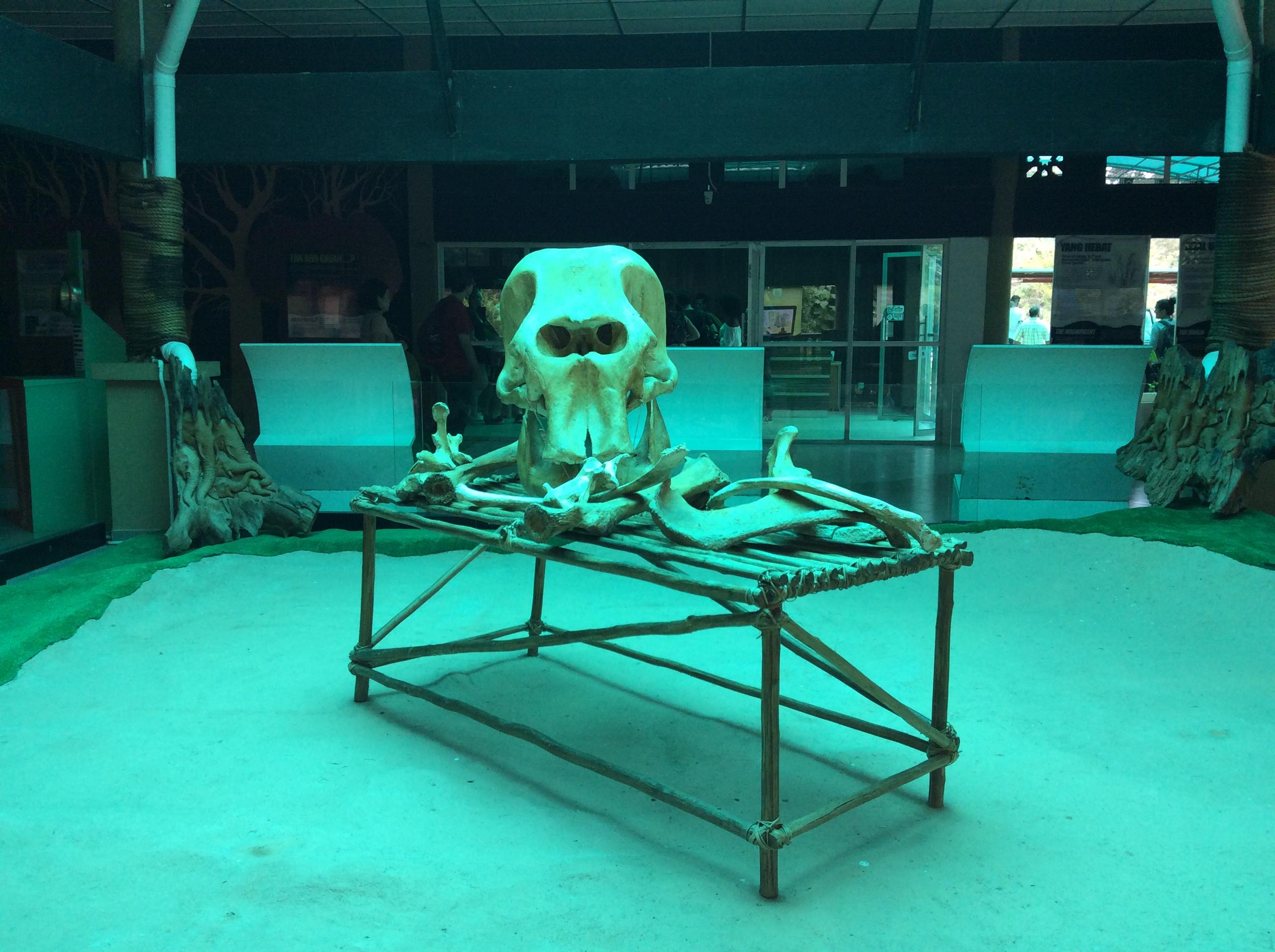 national-elephant-conservation-centre-kuala-gandah-museum-2