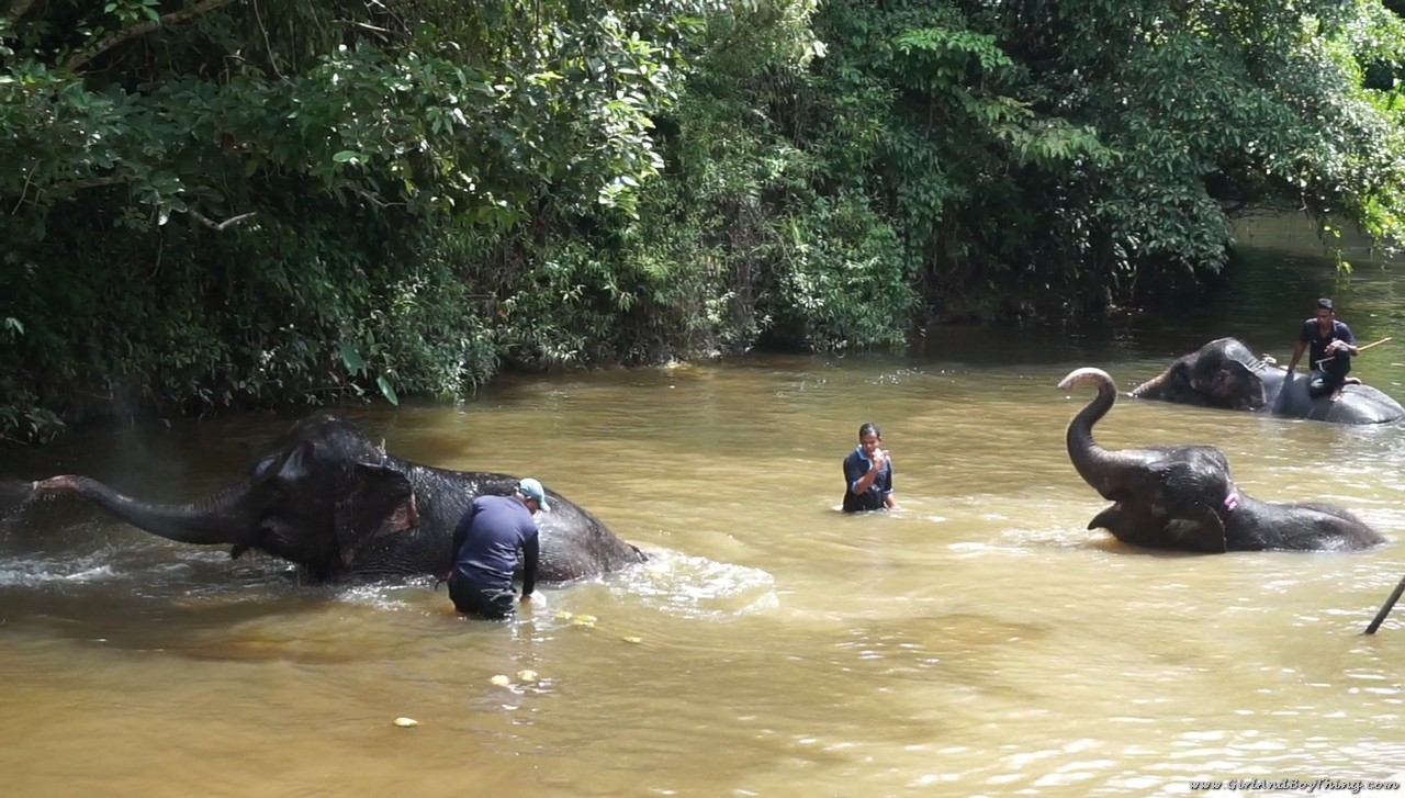 national-elephant-conservation-centre-kuala-gandah-elephant-bathing-1
