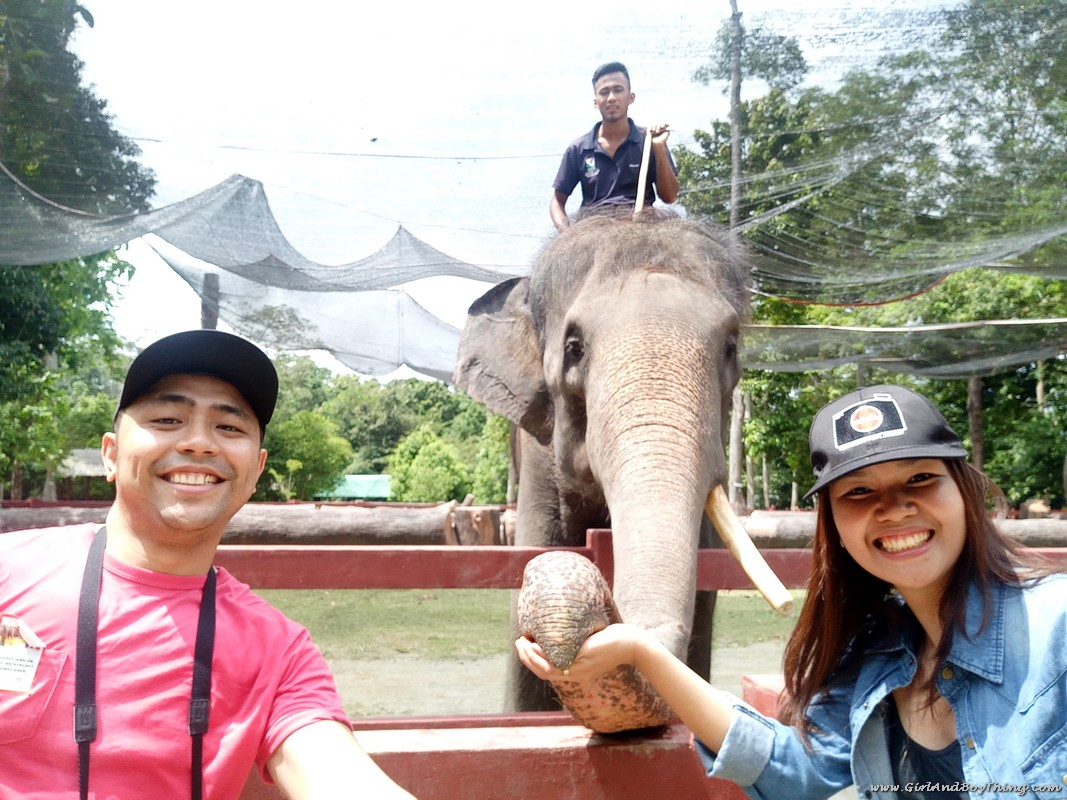 National Elephant Conservation Centre Kuala Gandah