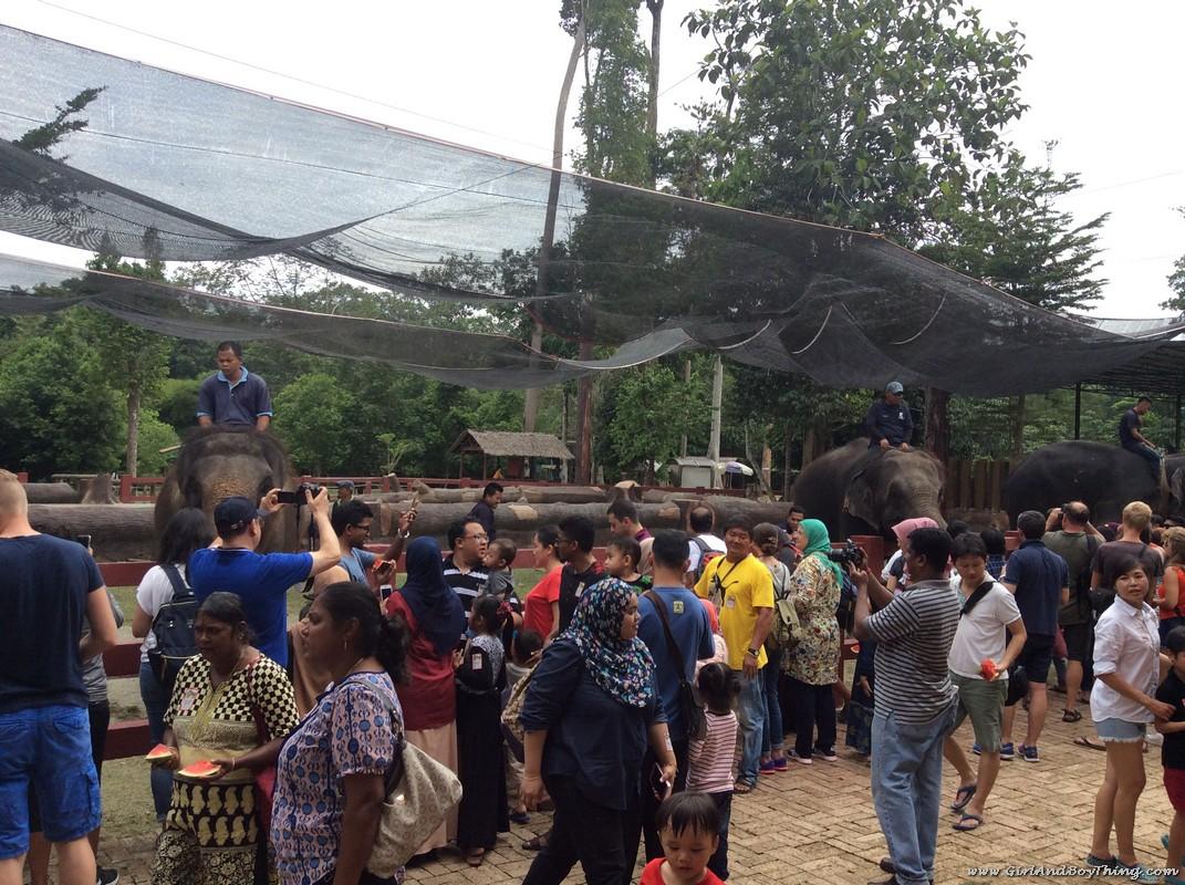 National Elephant Conservation Centre Kuala Gandah