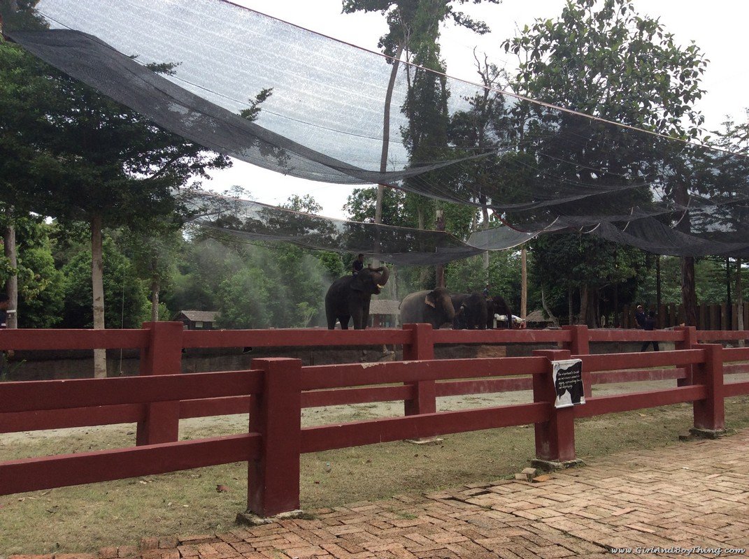 national-elephant-conservation-centre-pahang-malaysia