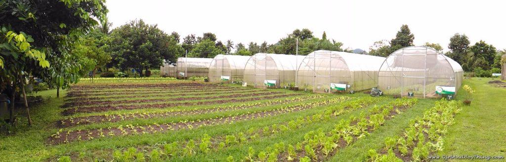 ato-belens-farm