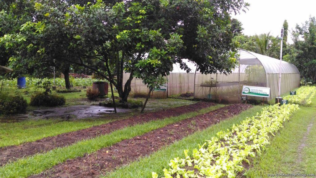 ato-belens-farm-plant-nursery-4