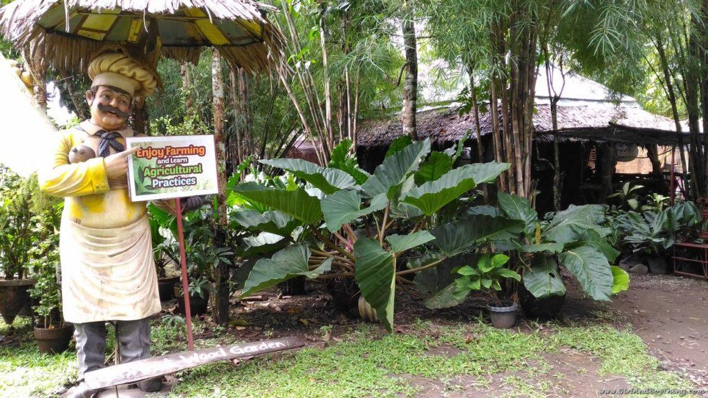 Forest Wood Garden.