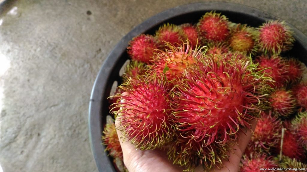 forest-wood-garden-rambutan-harvest