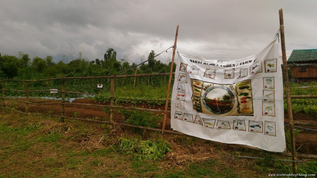 terra-verde-ecofarm-bahay-kubo-farming-2