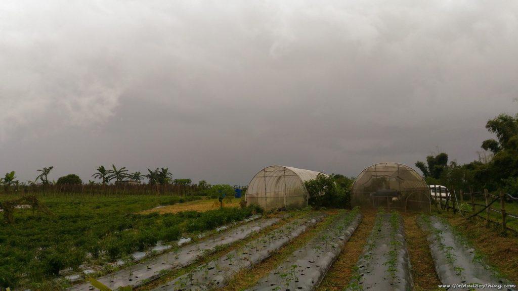 terra-verde-ecofarm-demonstration-farm