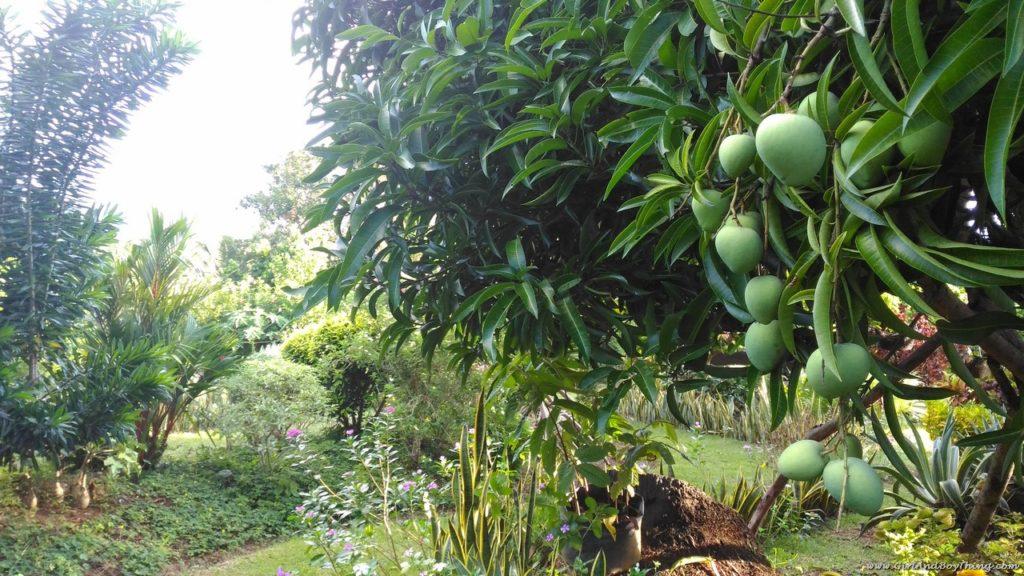 canaan-hill-farm-and-honey-garden-3