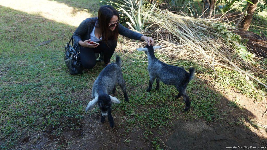 canaan-hill-farms-and-honey-garden-goats-1-1