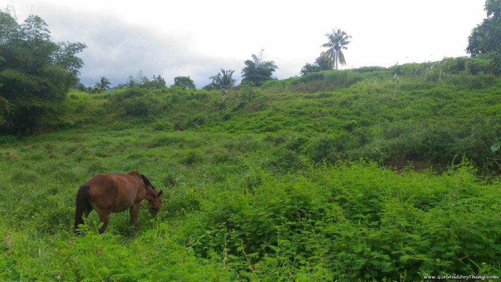 La Granja de Reyna Tacloban Samar