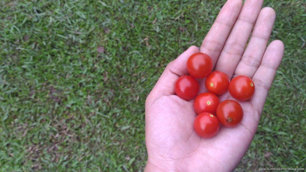 La Granja de Reyna Organic Farm