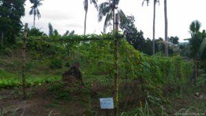 La Granja de Reyna Farm Tacloban