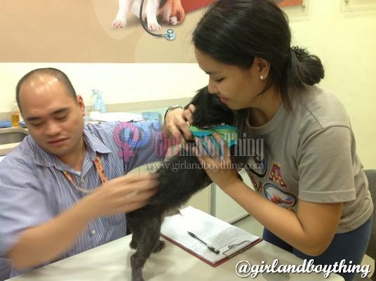 FREE Anti-Rabies Vaccine at Pet Express