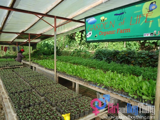 Organic Farming: A Healthy Option For A Better You
