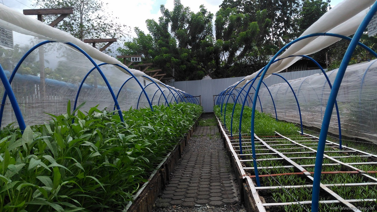 Cervantes Farm Square Foot Urban Farm