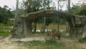 Wild savannah