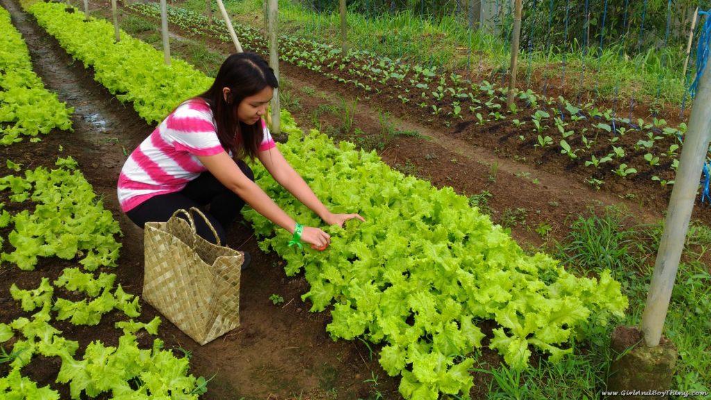 Costales Nature Farms laguna