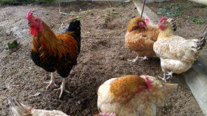 Costales Nature Farms farm tour
