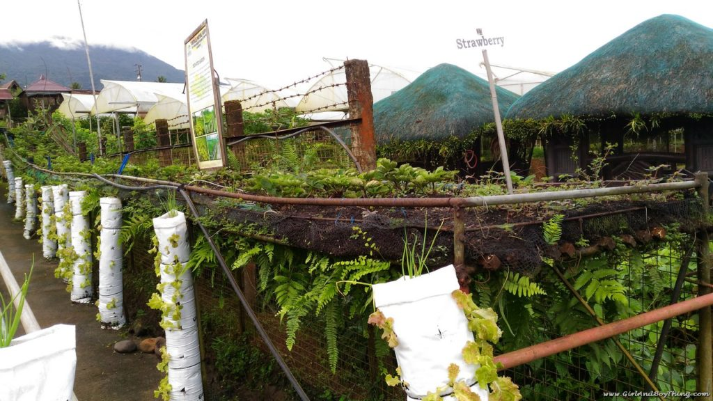 Costales Nature Farms: Where Organic Farming and Tourism Meet