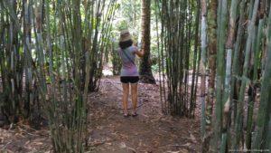 Forest Wood Garden bamboo