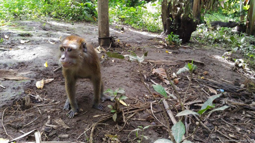 Forest Wood Garden monkey