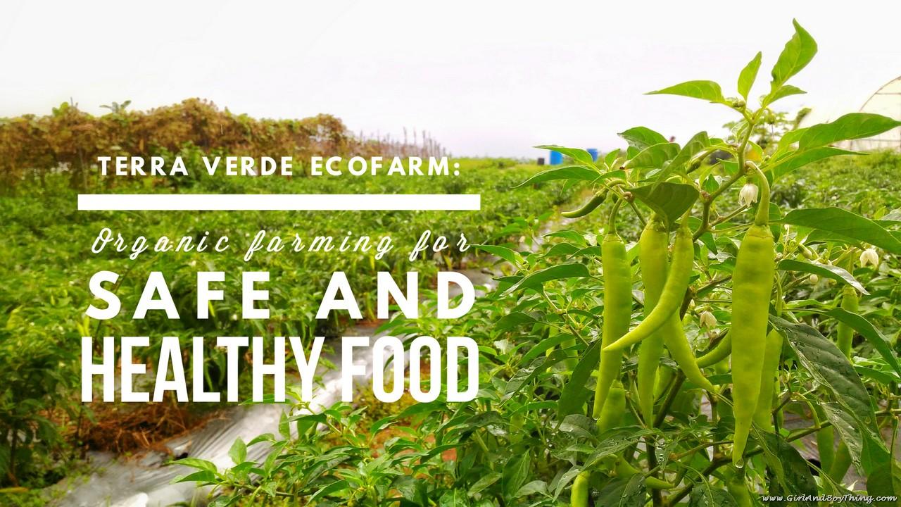 Terra Verde Ecofarm
