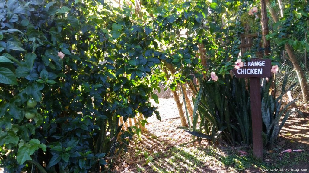 Canaan Hill Farms And Honey Garden: A Healthy Oasis On A Hill