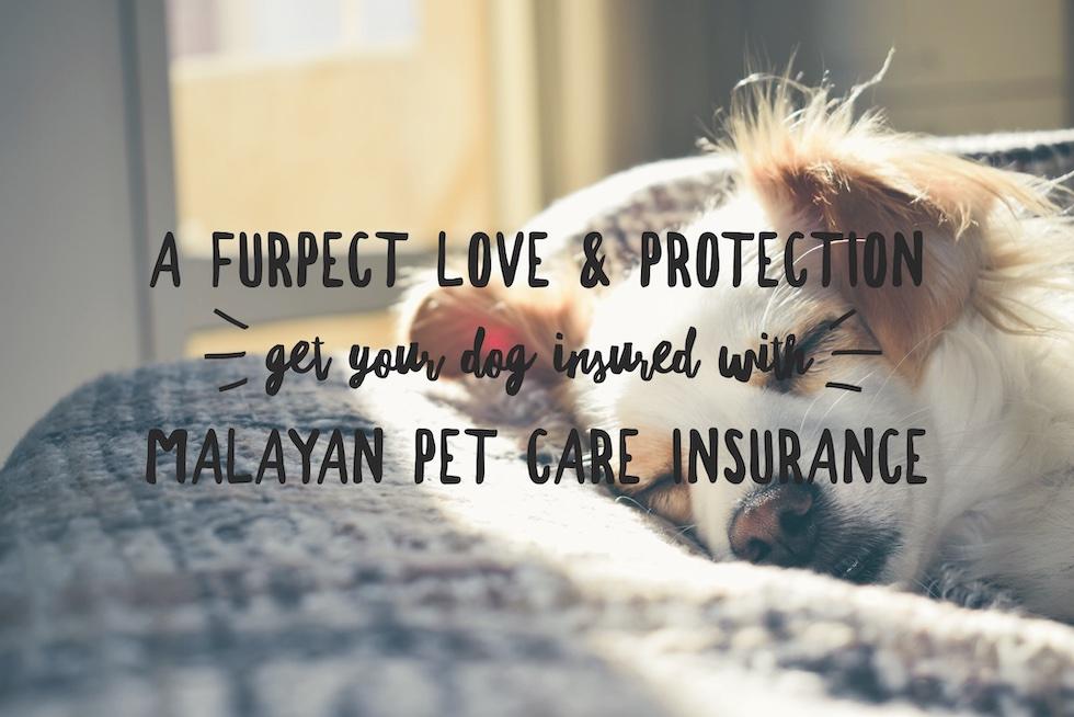 Malayan's Pet Care Insurance